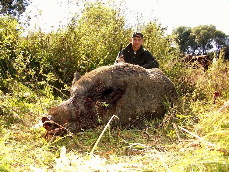 wann greifen wildschweine an